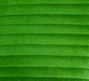 Leaf Texture. Macro Texture of a Green Leaf Royalty Free Stock Images