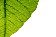 Leaf texture. Abstract leaf texture green pattrrn Royalty Free Stock Photo