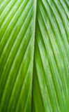 Leaf texture background. Is green color Stock Image