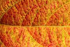 Leaf texture background Stock Photos