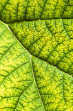 Leaf Texture Background Stock Photo