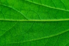 Leaf texture. Background Stock Image