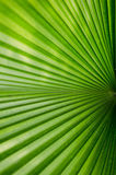Leaf. Texture background of green Leaf Royalty Free Stock Photography