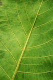 Leaf texture background Royalty Free Stock Photography