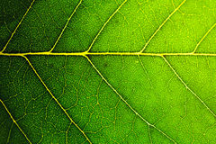 Leaf texture background Royalty Free Stock Photos