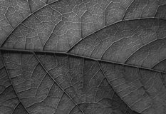 Leaf texture bw Royalty Free Stock Photos