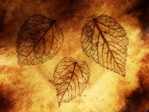 Leaf texture on ceramics surface Royalty Free Stock Photo