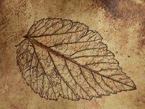 Leaf texture on ceramics surface Stock Image