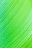 Leaf texture. Close up shot texture of leaf Stock Images