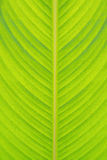 Leaf texture closeup. Green leaf texture detail closeup Stock Image