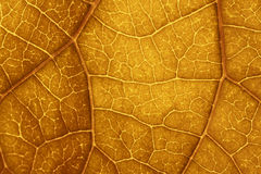 Leaf texture color brown Stock Photos