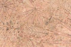 Leaf texture on concrete background Stock Photos