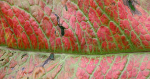 Leaf texture damaged by herbicide Royalty Free Stock Photos