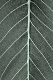 Leaf texture. In dark colors Royalty Free Stock Photos