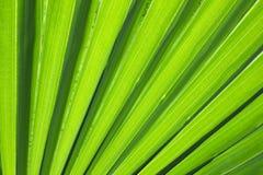 Leaf texture with diagonal through the frame Royalty Free Stock Photo