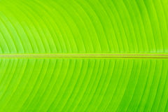 Leaf. Texture of a green leaf Stock Photography