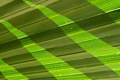Leaf texture. Texture of green leaf for background Royalty Free Stock Photo