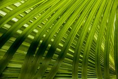 Leaf texture. Green leaves background. Leaf texture stock photos