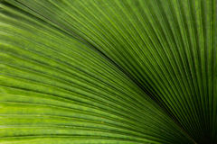 Leaf texture, a green natural background. Leaf texture, a green natural background closup Royalty Free Stock Images