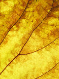 Leaf texture grunge style Royalty Free Stock Images