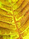 Leaf texture grunge style Royalty Free Stock Photography