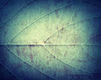 Leaf Texture, grunge textured background royalty free stock photography