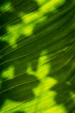 Leaf texture in hard light Stock Image