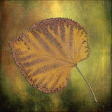 Leaf on texture II royalty free stock images