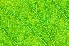 Leaf texture, leaf background for design. Stock Photo