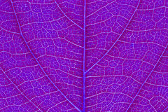 Leaf texture, leaf background. Stock Photos