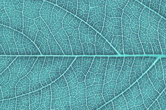 Leaf texture, leaf background. Royalty Free Stock Images