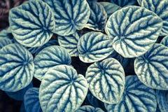 Leaf texture or leaf background. Stock Images