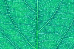 Leaf texture or leaf background for website template, spring beauty, environment and ecology concept design. Color effect Royalty Free Stock Photography