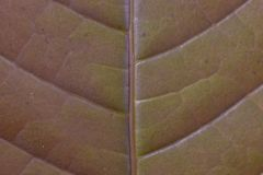 leaf texture patern board background royalty free stock photography