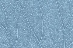Leaf texture pattern for spring background environment and ecology concept design. Royalty Free Stock Image