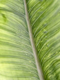 Leaf texture pattern for spring background, environment and ecol Stock Photography