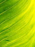 Leaf texture pattern for spring background, environment and ecol Royalty Free Stock Image
