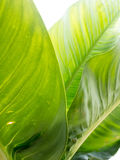 Leaf texture pattern for spring background, environment and ecol Stock Images