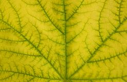 Leaf texture pattern for spring background stock photography