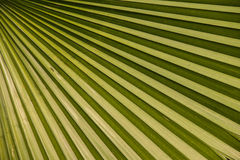 Leaf texture Royalty Free Stock Photo