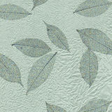 Leaf texture series. Royalty Free Stock Photography
