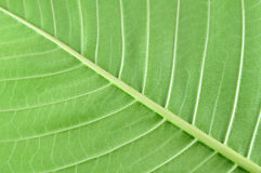 Leaf texture surface Royalty Free Stock Photography
