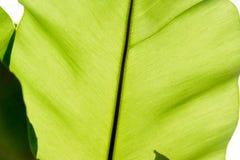 Leaf Texture. stock photos