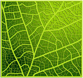 Leaf texture, veins vector background design. Beautiful illustration ready to use Stock Images