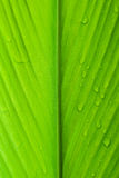 Leaf texture with water drop. close up shot Stock Photography