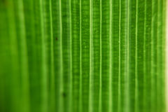 Leaf Textured Royalty Free Stock Photography