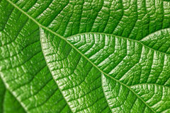 Leaf textured background Royalty Free Stock Photos