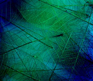 Leaf textures. In fresh colors Stock Photography