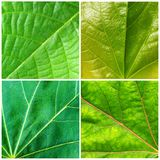 Leaf textures Stock Photos