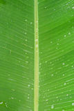 Leaf texure. Leaf close up texture and detail wallpaper background Stock Image